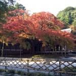 秋の早朝ドライブ♬雷山千如寺大悲王院の大カエデに感動‼