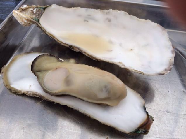 ぷっくりした牡蠣♪