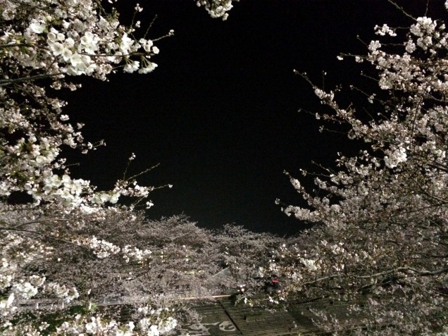 黒と薄い桃色って日本独特の「美」を感じます。