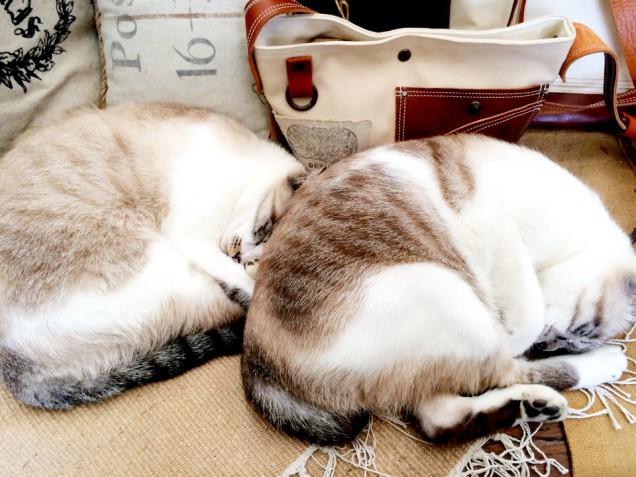 イベントと関係ないですが、久しぶりに帰りに寄ったArt School and Dover art space 「Dover」さんで猫団子発見!