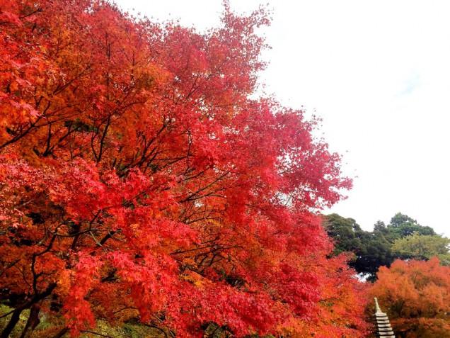 売れてにある庭園の紅葉も素晴らしいのです。。!
