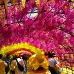 今が見ごろ!100本の藤が咲く「北九州河内藤園」。
