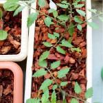 夏の収穫を目指してベランダ菜園を始めました。